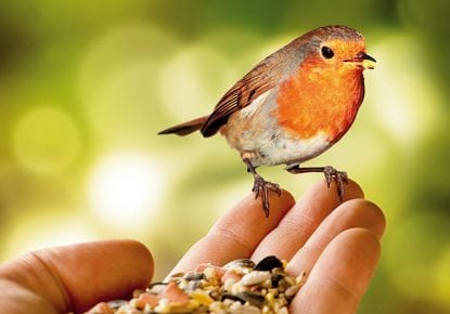 Robin resting on a person's hand
