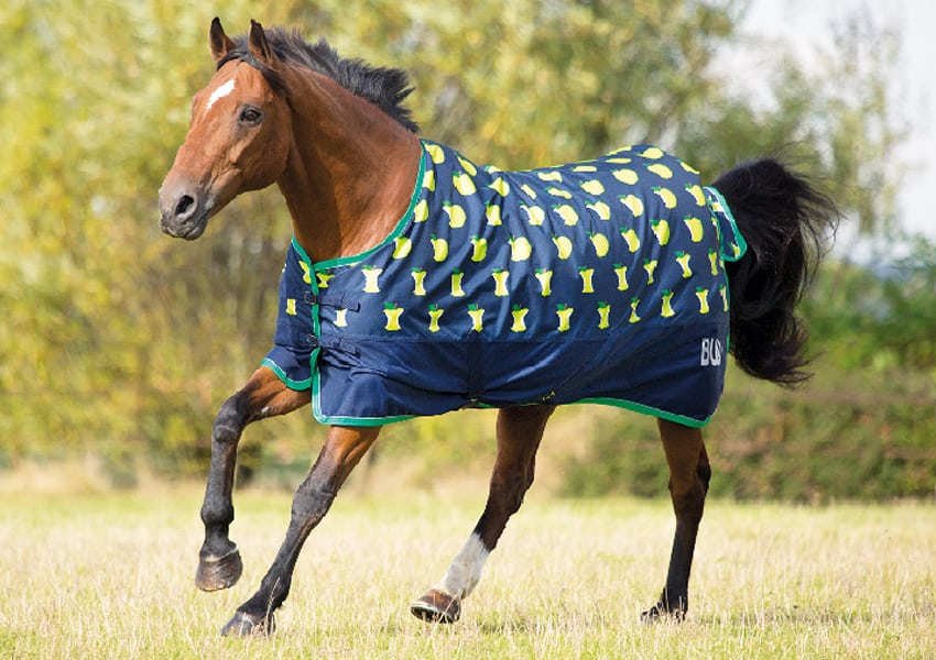 Horse wearing a turnout rug